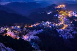 吉野の千本夜桜。