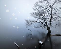 静謐の湖。