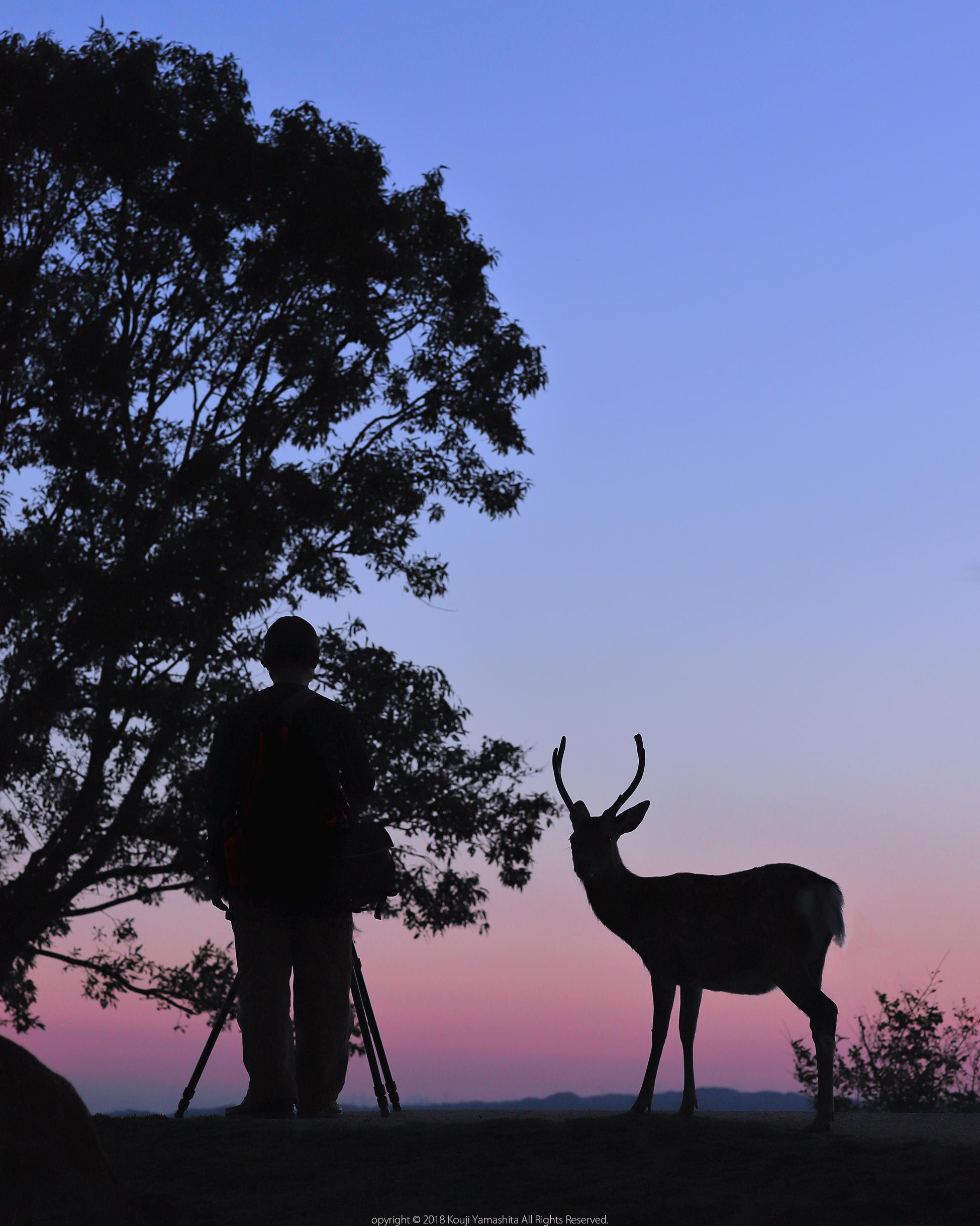 神鹿とカメラマン。