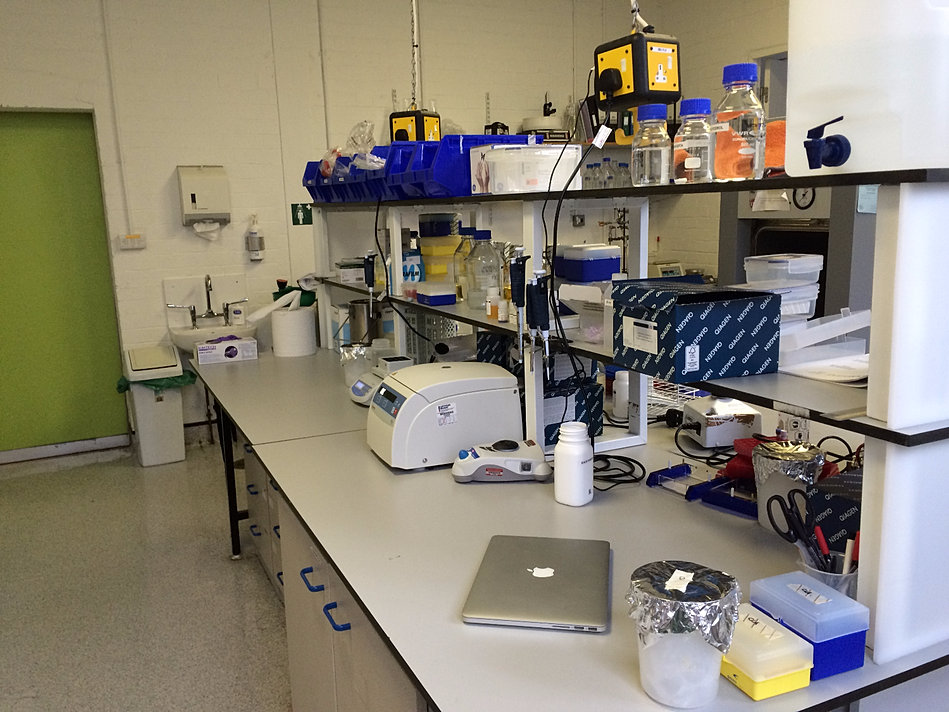 RBM Pathology Lab
