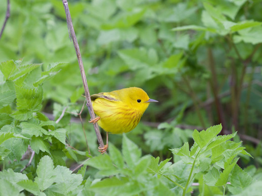 Welcome back warblers!