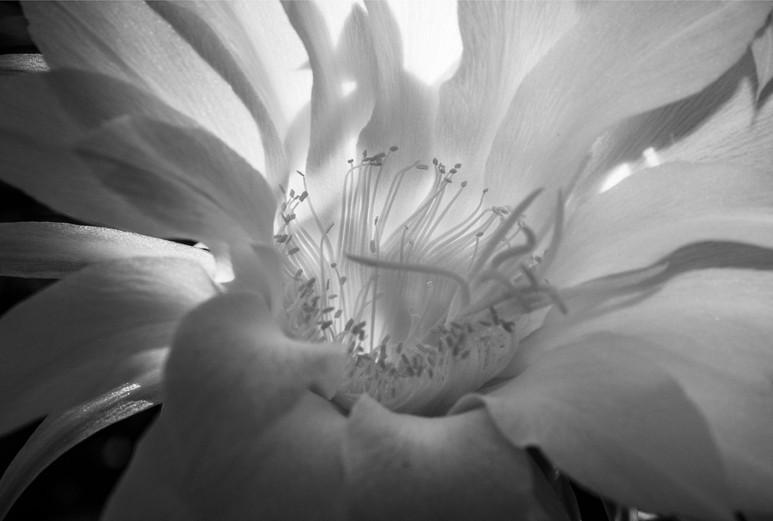 Dawn Bloom