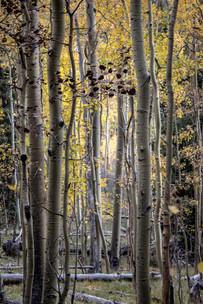 Dense Forest II