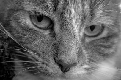 Catty Wompuss, Companion