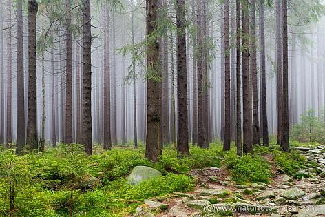 Harz_DSC_6287.jpg