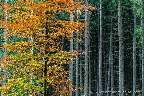Ilsetal Harz_IMGP9663.jpg