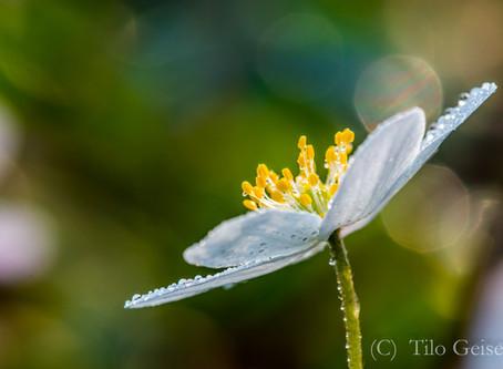 Pflanzenfotografie 10 Tipps für gelungene Fotos