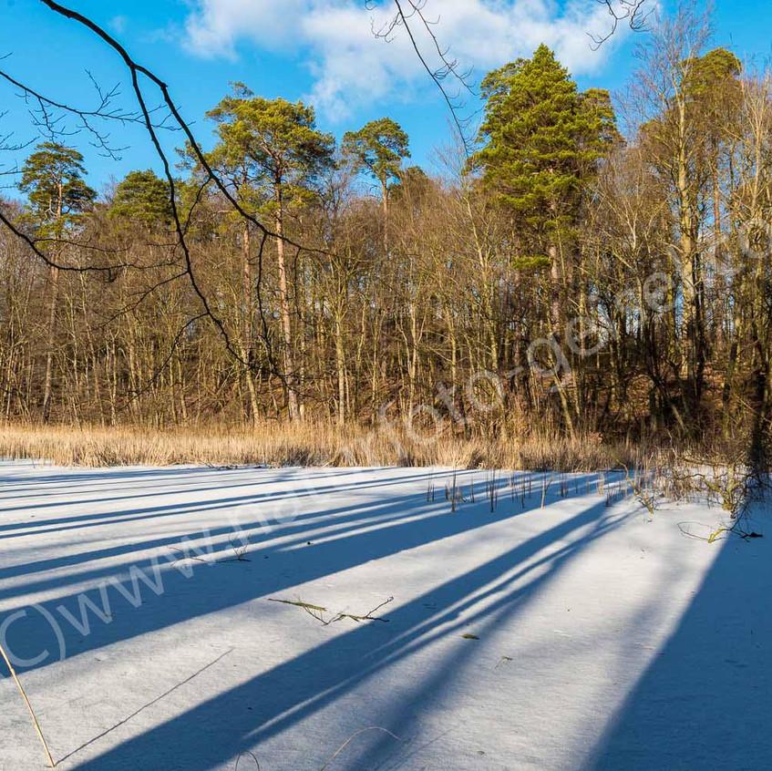 Waldmoor mit Eis DSC_1507
