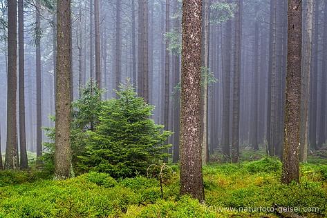 Harz_DSC_6282.jpg
