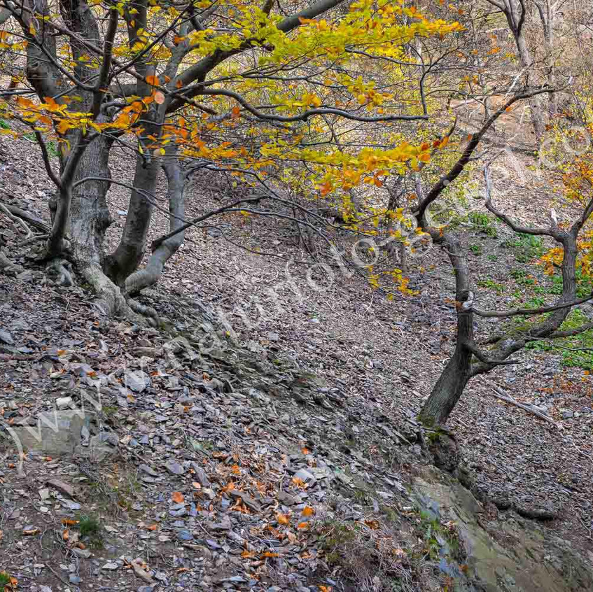 Bodetal, Harz, Hangschuttwald_8945