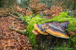 Pessiner Wald Havelland_DSC_6553.jpg