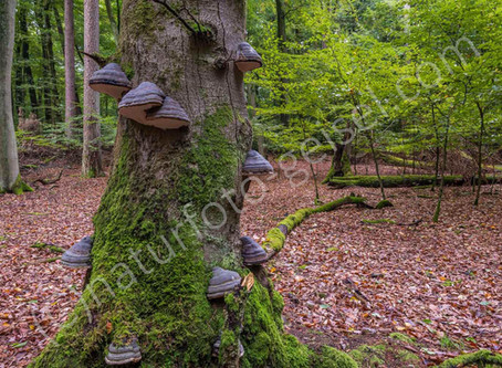 """Fotografie im Weltnaturerbe """"Alte Buchenwälder Deutschlands"""""""