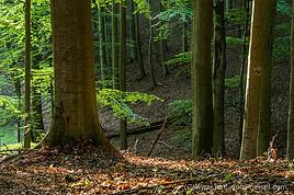 Buchenwald Grumsin_IMGP6432.jpg