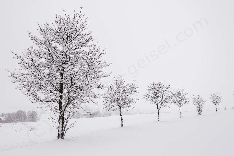 Erzgebirge, Seiffen DSC_0180
