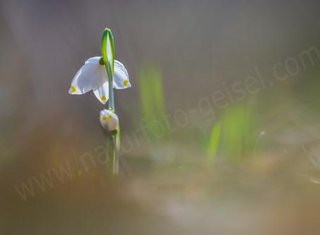 Pflanzenfotografie mit dem Nikkor 5,6 200/500 ED, VR