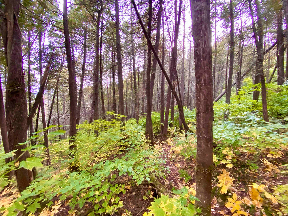 Boundary Waters Trail Run Border Route Trail
