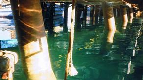 Point Wilson Explosives Area - 1999