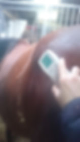Professional Equine Scenar