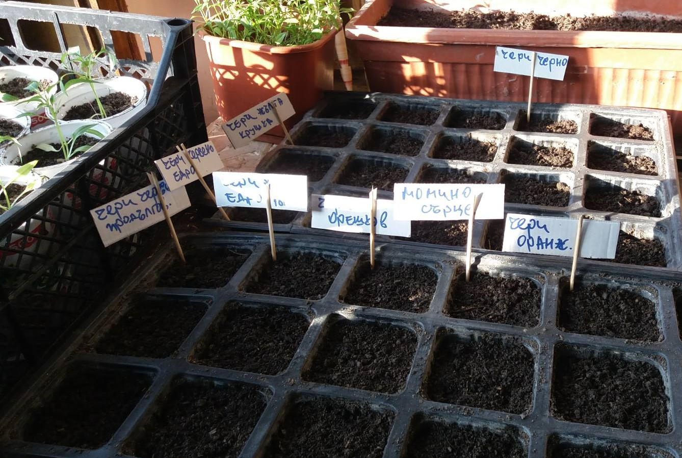 How to grow seedlings at home
