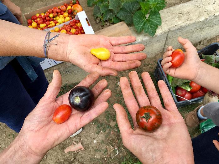 Стартира първият онлайн курс на Фондация Ботаника Лайф