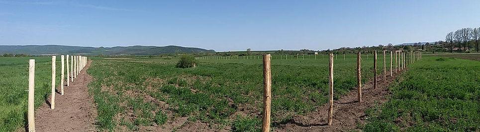 Градините на Ботаника лайф село Надарево началото