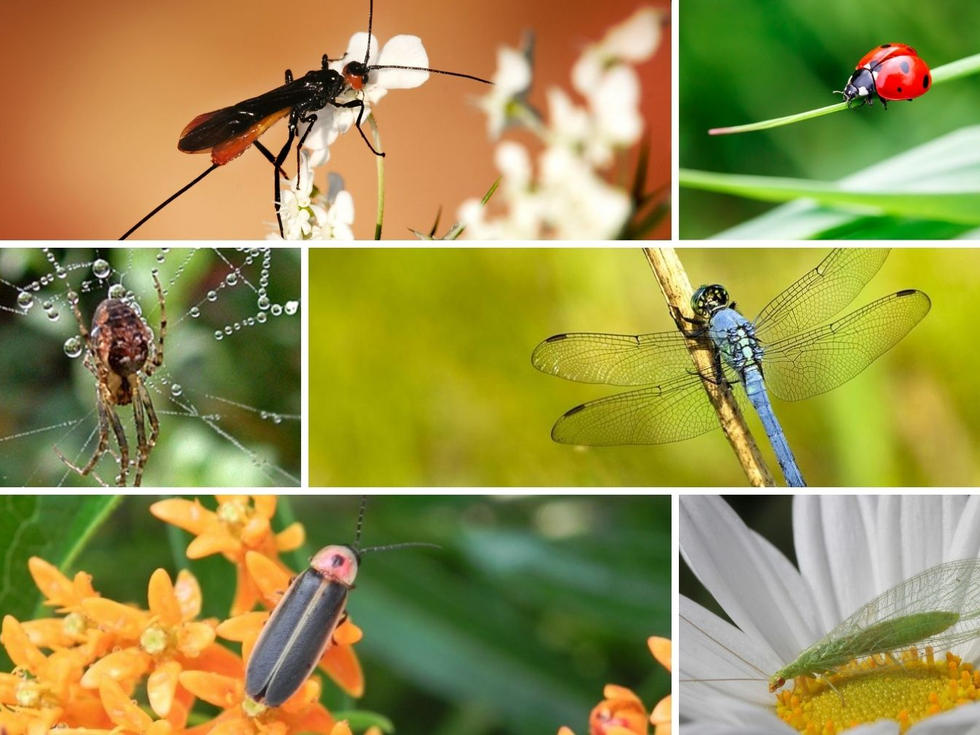 The Beneficial Insects
