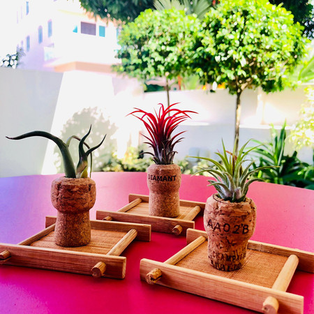 Air plants from wine cork