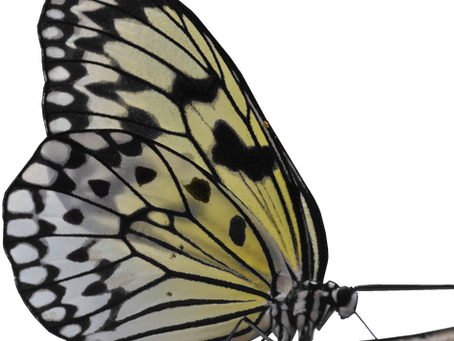 FLY: what does the butterfly symbolize to you?