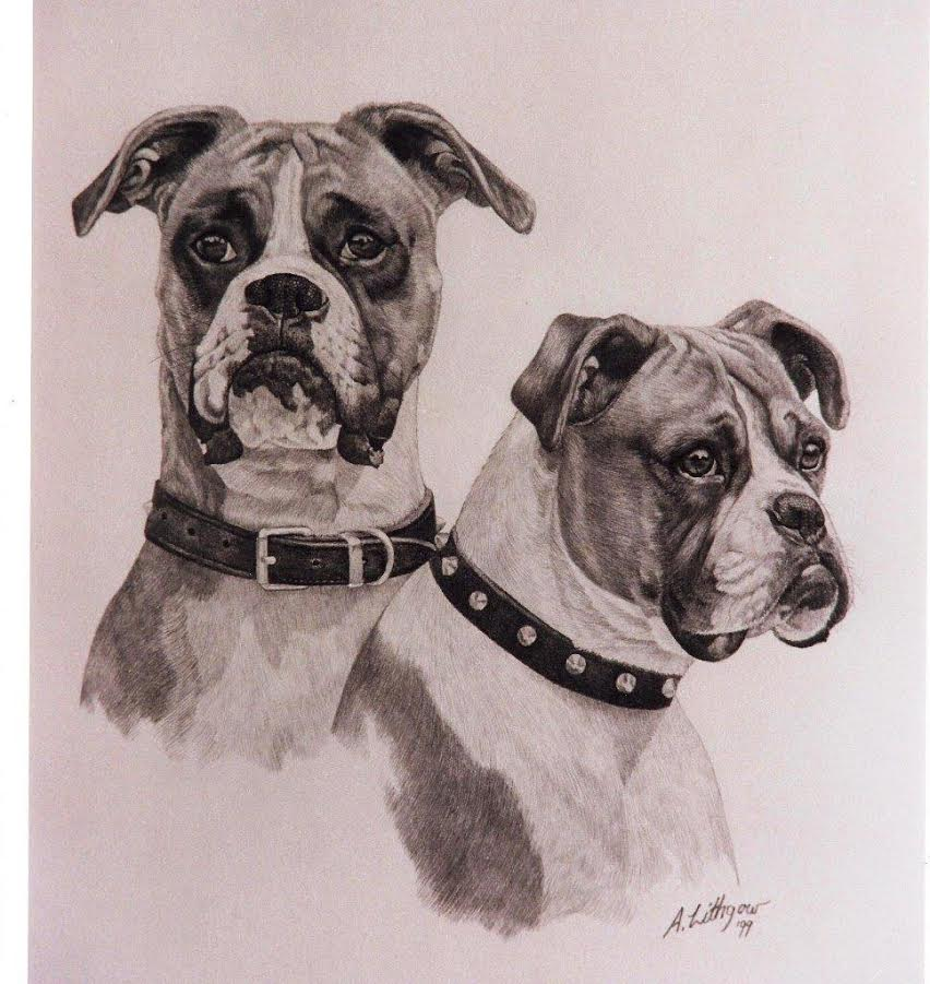 Two Boxers