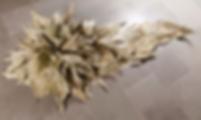 Loose Leaf Studios_Ancestor.png