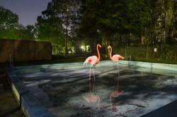 Sonsie_Paul_Flamingos