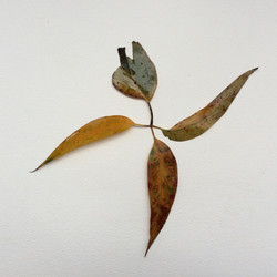 Leaves  140715a  436kb