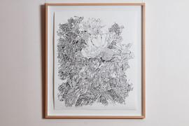 RROSE_Banksia_Charcoal g.jpg