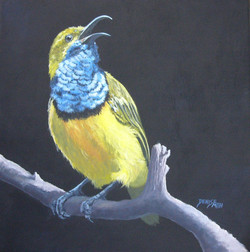 Olive Backed Sunbird (Male)