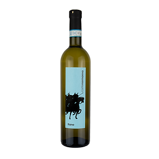 fiano.png