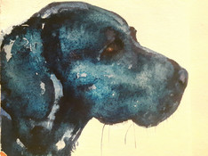 Dilly Watercolour Sketch