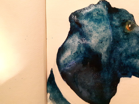 Dilly Study 1 Watercolour