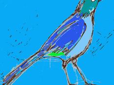 Single Blue Bird