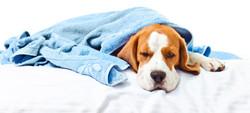 διαρροια και εμετο σκυλι