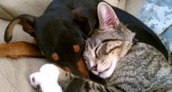 dog and cat feeling sick