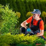 gardener dublin 12.jpg
