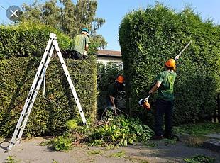 Tree maintenance Dublin