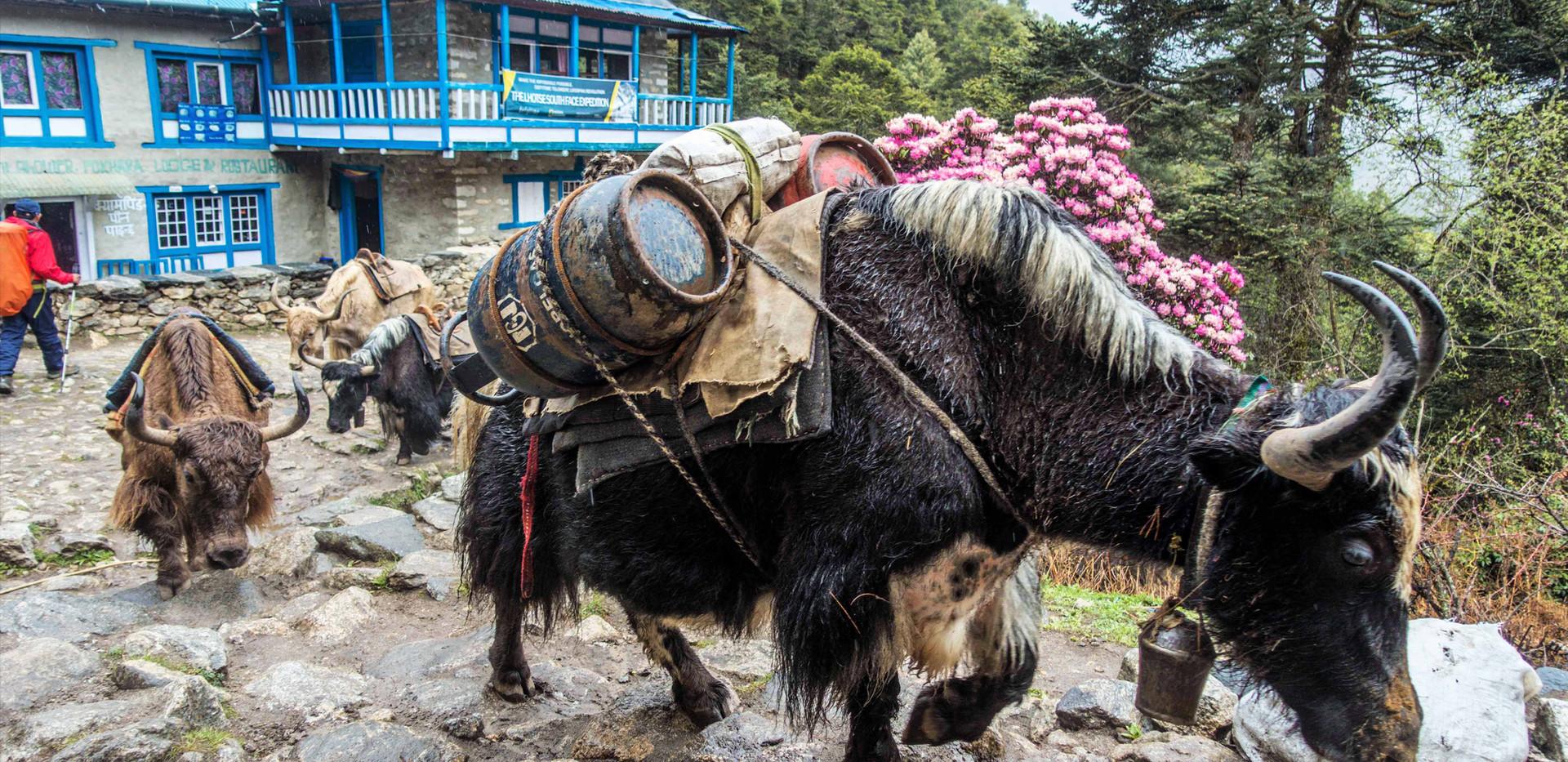 Nepal-2019-174- Khumbu Trek.jpg