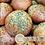 Thumbnail: Keto Garlic Oregano Buns