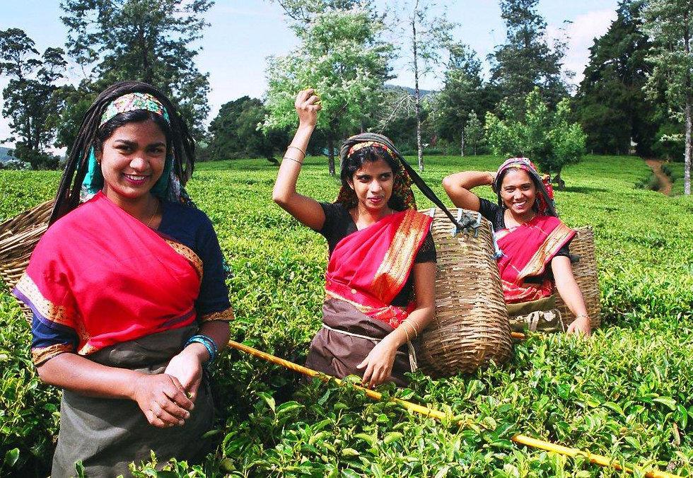 Smiling tea pluckers in Sri Lanka