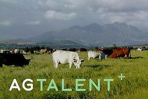 ag talent.jpg