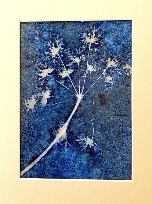 Original flower cyanograph