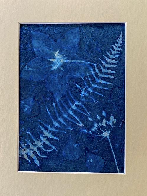 Original floral cyanograph