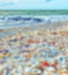 sanibel-island-shells-on-beach.jpg