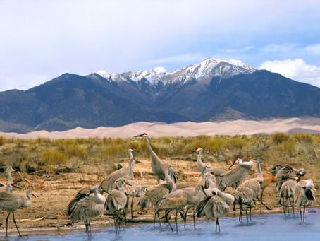 Protecting Colorado's Crane Haven